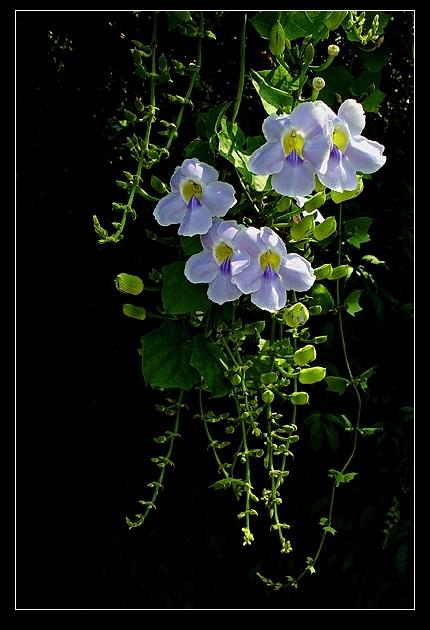 如何获得全色背景的图片 - 白桦林 - 白桦林的摄影博