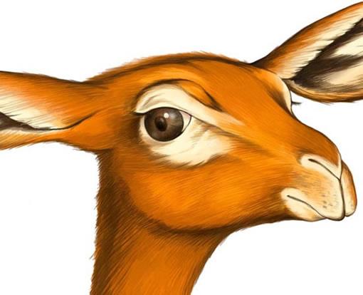 首页 cg绘画 手绘教程 > [ps pt]动物的画法  出处:5d多媒体   责任编