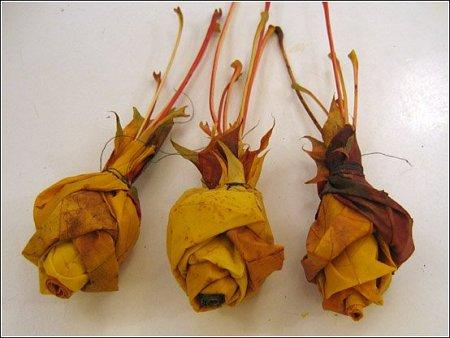 用枫叶手工制作玫瑰花