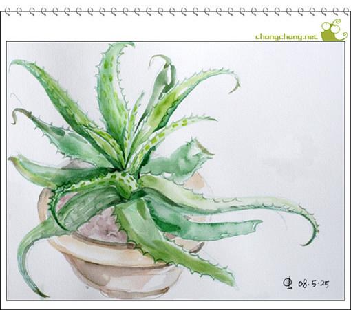 素描芦荟的绘画步骤