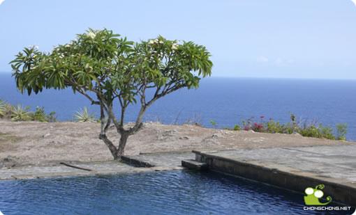 巴厘岛:众神居住在椰子树上(三)