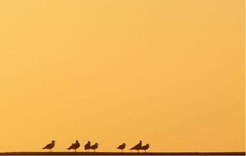 极简主义艺术摄影 - 抚水浮云 - 抚水浮云的博客